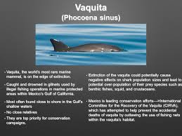 extinct endangered and conserved species by aditi ppt download