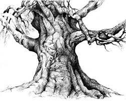 tree trunk detailed drawing wakefield ri we lost a tree last