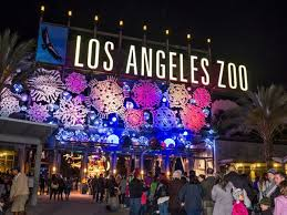 Wow Lights Nov 21 La Zoo Lights Sets The Zoo Aglow With Wonder Awe And Wow