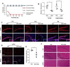 mosaic expression of atrx in the mouse central nervous system