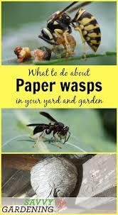 93 best images about garden pest control on pinterest gardens