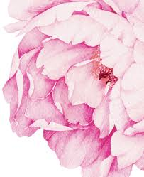 peonies flowers peony flowers wall sticker watercolor peony wall stickers peel