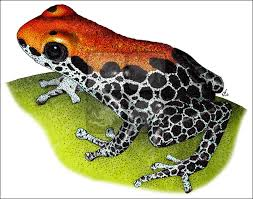 poison dart frogs full color u0026 line art illustrations at inkart
