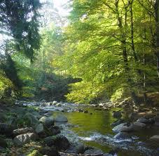 Baden Im Harz Deutschland Urlaub Elend Und Sorge Locken Touristen In Den Harz