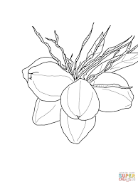 coconuts on palm coloring page free printable coloring pages
