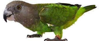 vital l full spectrum light for birds choosing a brown headed parrot petplace