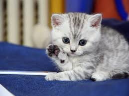 Cute Wall Papers by Cute Cat Wallpaper 34 Wallpapers U2013 Adorable Wallpapers