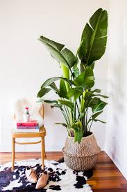 how to finally stop murdering your house plants