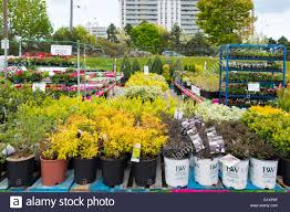 flowers garden city garden centers open in toronto as the spring arrives the selling