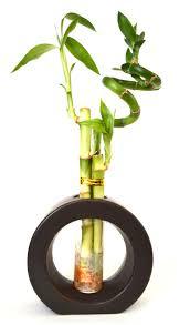 amazon com 9greenbox lucky bamboo 8 braided with black
