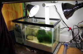 Refugium Light 10 Gal Refugium And Scrubber Living Reefs