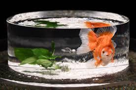 8 000 goldfish displayed in tokyo art exhibit