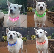 Light Up Dog Collar Light Up Dog Collar Ebay