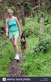 belgian shepherd nature woman with a belgian shepherd dog walking on a walkers welcome