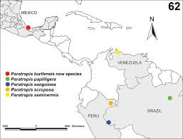 Coyoacan Mexico Map by First Record Of The Mygalomorph Spider Family Paratropididae