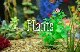 Live Plants In Community Aquariums by Decorating Your Fish Tank Dos And Don U0027ts Pethelpful