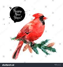 watercolor cardinal red bird illustration merry stock illustration