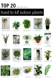 indoor plant energy types of indoor plants dazzling house plant categories home