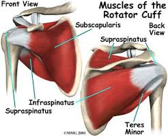 How To Palpate Subscapularis Impingement U2013 What Does It Mean For Soft Tissue Therapists