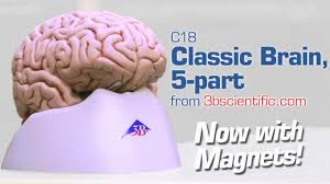 c18 classic brain 5 part youtube