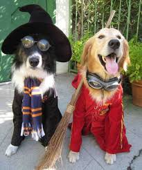Husky Dog Halloween Costumes Dogs Deserve Halloween Costumes