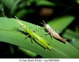 kasten ältest wanzen auf haus stockfoto bild kasten wespe käfer bilder und stockfotos 1 693 wespe käfer fotografie und