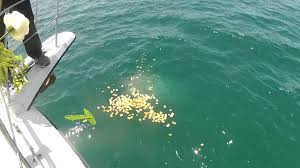 scattering ashes at sea burial at sea basket service
