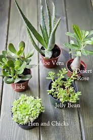 2492 best solely succulent garden ideas images on pinterest