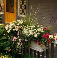 Window Boxes Planters by 1594 Best Window Boxes Images On Pinterest Window Boxes Windows