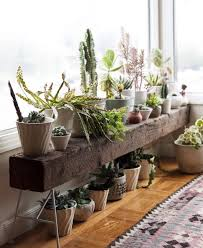window table for plants everything you always wanted to know about houseplants bench