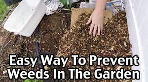an easy way to mulch and prevent weeds in the garden youtube