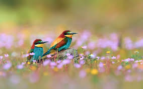 wallpaper with birds wallpaper s collection birds wallpapers