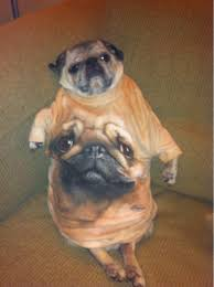 Yo Dog Meme - buddy s xzibit meme yo dog we put a pug in yo pug so you can