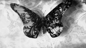 black and white butterfly gif find on giphy