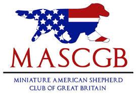 australian shepherd club of america the breed basileas miniature american shepherds
