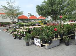 perfect home depot garden center 40 for interior decor home with