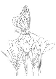 appealing butterfly on flowers butterflies u insects coloring pages