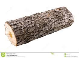 wood log stock photo image of background material textured