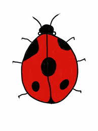how to draw and colour a basic ladybird ladybug youtube