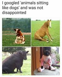 Disappointed Dog Meme - dopl3r com memes i googled animals sitting like dogs and was not