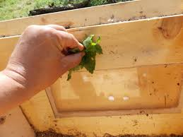 How To Make A Top Bar Beehive Converting A Top Bar Hive Into A Swarm Trap
