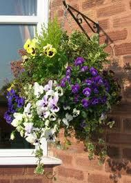 Plants For Winter Window Boxes - winter hanging basket garden pinterest winter gardens and