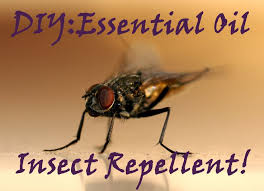 the 25 best insect repellent ideas on pinterest diy mosquito