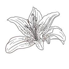 tropical flower drawings free download clip art free clip art