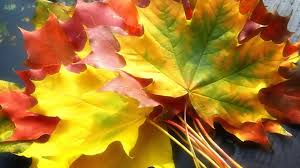 leaves colorful fall autumn foliage nature hd wallpapers hd