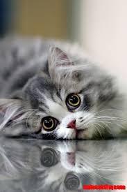 beautiful kittens cute cats and kittens awww so beautiful kitten