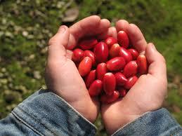 14 scientific health benefits of miracle fruit dr heben