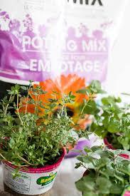 diy herb garden 5 key steps to keep your herb garden alive