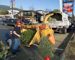 tree service companies do far more than just removals tree