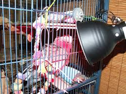 Reptile Heat Lamps Safety by Providing A Heat Source In A Bird Health Emergency